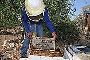 Beekeeper works on a beehive