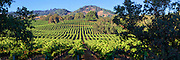 Wine Country Vineyards panorama in Alexander Vally in the Napa-Sonoma region of California