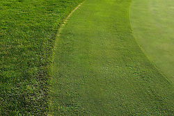 Stanford golf course. Edge of grass, rough area.