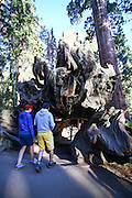 Sequoia and Kings National Park, California, USA