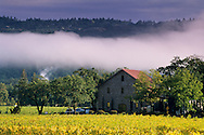 Morning fog over vineyards at Ehlers Estate Winery, near St. Helena, Napa County, California
