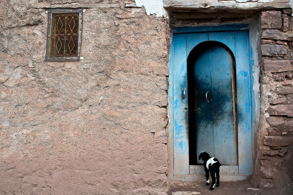 The highest mountain range in North Africa, the High Atlas runs diagonally across Morocco.  The Toubkal region contains the highest peaks.  It is only two hours from Marrakesh.  Here, a lamb peeks into the blue door of a village home.