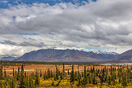 Fall colors of the taiga in the Matanuska Valley in Southcentral Alaska. Afternoon.