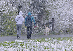 THEMENBILD - Spaziergänger mit ihrem Hund in dichtem Schneetreiben, aufgenommen am 05. Mai 2019, Kaprun, Österreich // Walker with her dog in dense snowy hustle and bustle on 2019/05/05, Kaprun, Austria. EXPA Pictures © 2019, PhotoCredit: EXPA/ Stefanie Oberhauser