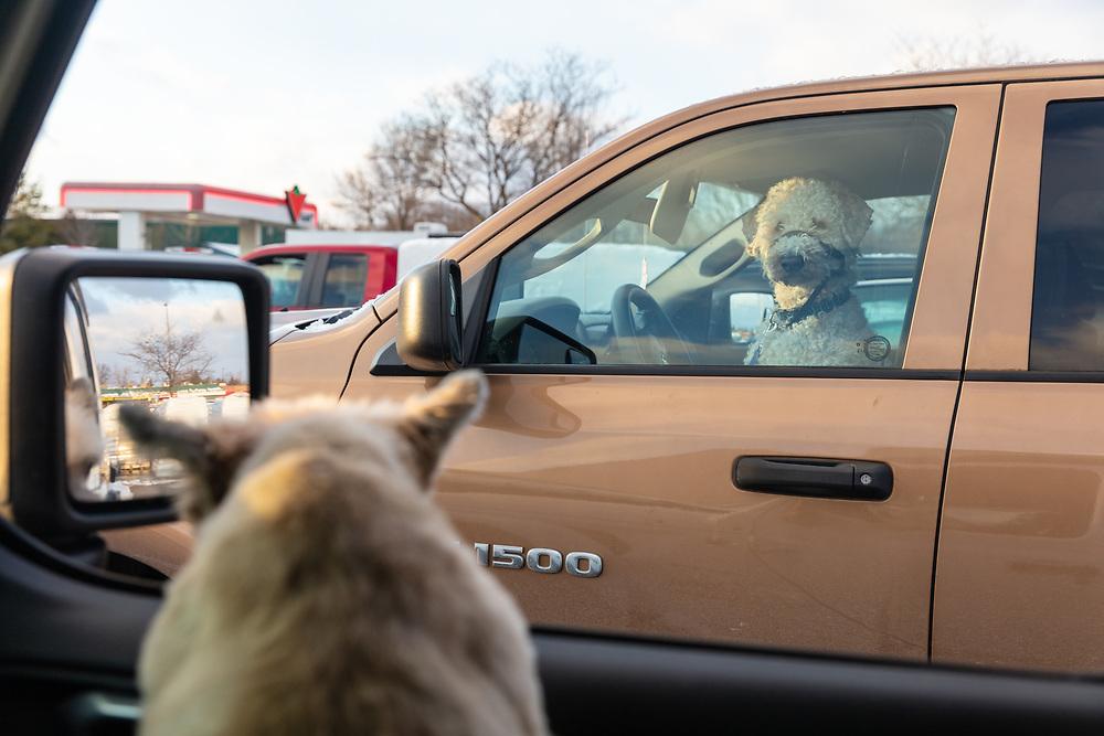 https://Duncan.co/dog-driving-a-truck