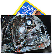 National Geographic magazine (June 2011) publishes Solvin's Deep Sea Viperfish photo in Visions of Earth.