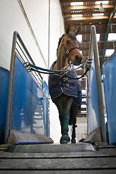 Paard op de loopband<br /> © Dirk Caremans