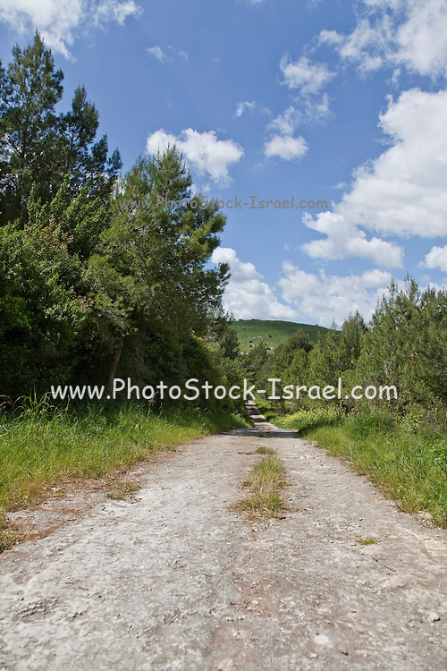 Israel, Ramat Menashe, Nahal Hashofet nature reserve