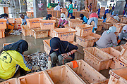 Sept. 27, 2009 -- PATTANI, THAILAND:   Muslim women sort fish in the fishing port in Pattani, Thailand, Sept. 27. Fishing is the main industry in Pattani, one of just three Thai provinces with a Muslim majority. Thousands of people, mostly Buddhist Thais and Burmese Buddhist immigrants, are employed in the fishing industry, either crewing ships, working in processing plants or working in the ship building and refreshing yards.  Photo by Jack Kurtz