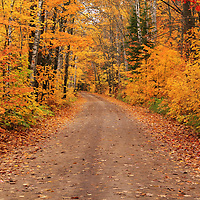 """""""Magical Autumn Mystery"""" 2<br /> <br /> A magical winding back country road in autumn! Fall foliage at it's peak! Pure magic!!<br /> <br /> Autumn Landscapes by Rachel Cohen"""