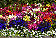 A flower bed at the entrance to Killarney town in County Kerry taken in the summer of 2011..Picture by Don MacMonagle