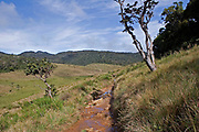 View of Horton's Plains National Park showing upland grassland and montane forest vegetation, Sri Lanka