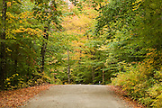 A back road through fall colored trees.