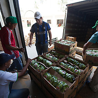 preparing organic Fairtrade bananas for export at a the BOS plant in Salitral, Piura, Peru