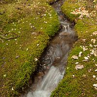 A spring-fed streams flows through moss in Banff National Park, Alberta, Canada.