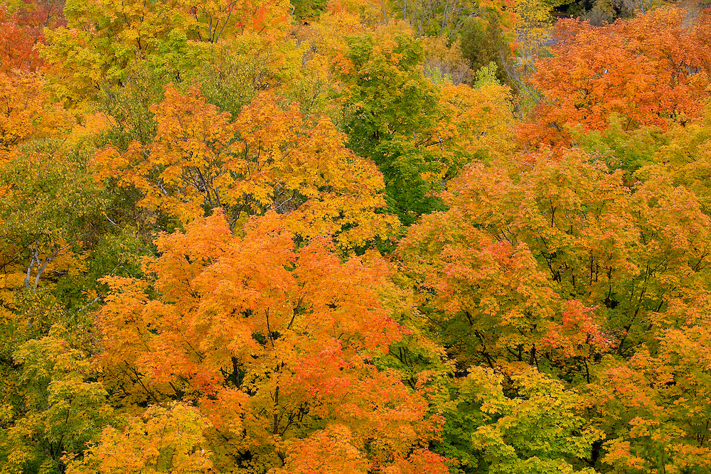 Fall color in Penninsula State Park in Door County, Wisconsin.  (Photo / Mike Roemer Photography)