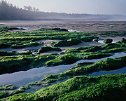 Tide pools exposed at low tide, Beverly Beach State Park