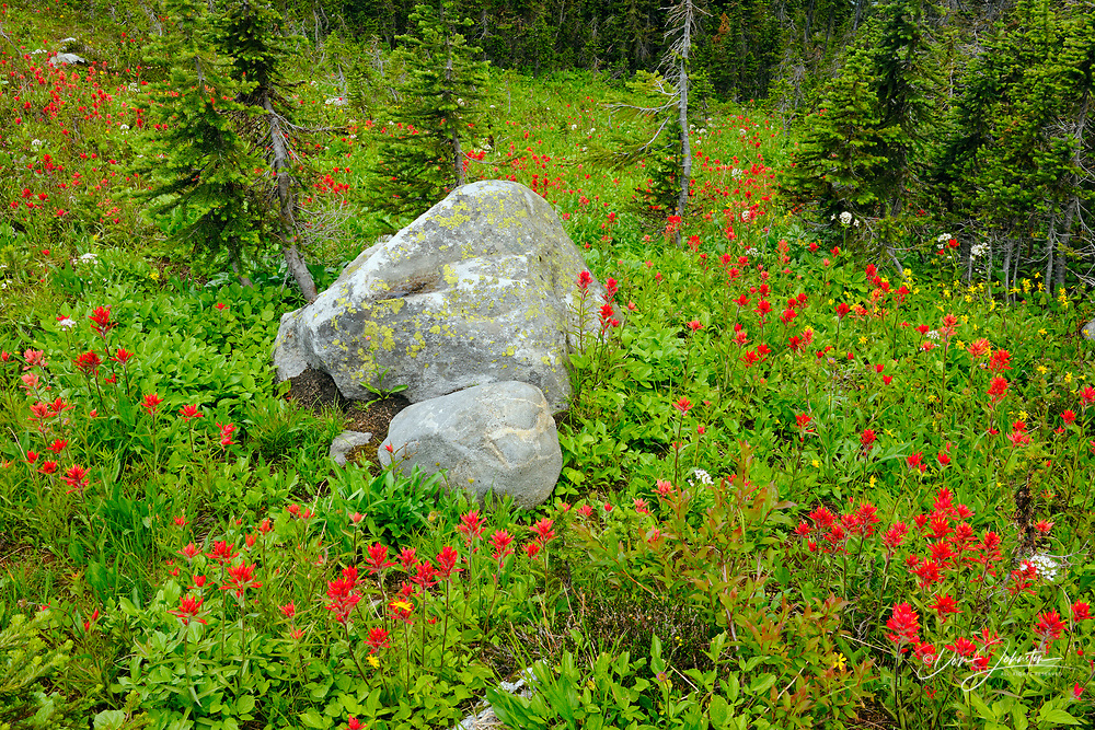 Alpine meadow with paintbrush and rocks, Mount Revelstoke National Park, British Columbia, Canada
