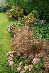 Looking along border with Carex buchananii, Sedum Joyce Henderson' and Hydrangea quercifolia