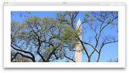Springtime at the Washington Monument in Washington D.C., USA