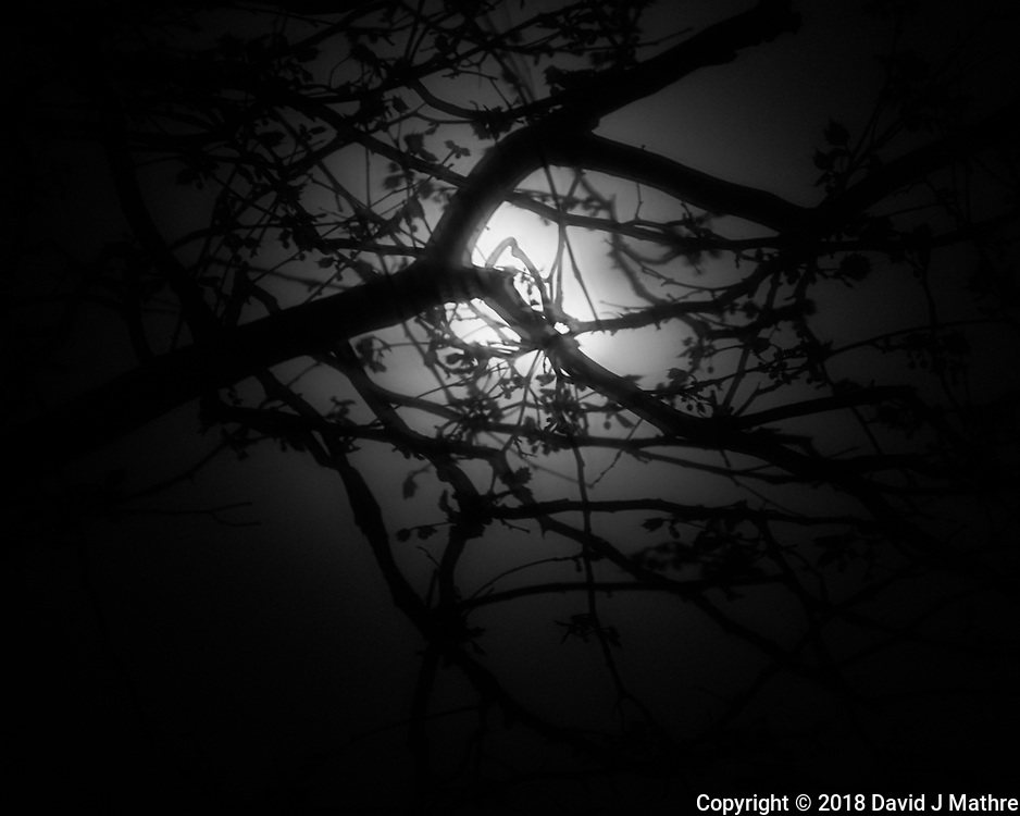 Moonlight Through Fog. Image taken with a Fuji X-T2 camera and 100-400 mm OIS telephoto zoom lens