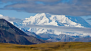 Denali rises to 20,310 feet elevation (6191 m, aka Mount McKinley) along Denali National Park Road near Eielson Visitor Center, Alaska, USA. Denali is the highest mountain peak in North America, and measured from base to peak, it is earth's tallest mountain on land. Denali is only visible 1 out of 3 days. Rain falls as light showers or drizzle for half of summer days. The earliest shuttle bus doesnt reach Denali views until mid morning. The least cloudy time is early morning, which suggests overnight tenting at Wonder Lake to best see the mountain. Mount McKinley is a granitic pluton uplifted by tectonic pressure while erosion has simultaneously stripped away the somewhat softer sedimentary rock above and around it. Panorama stitched from 2 overlapping photos.
