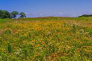 Wild Flowers Cutuchogue, NY