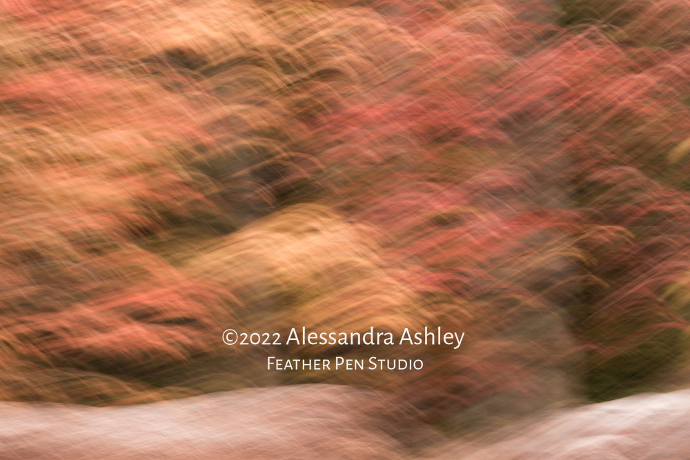 Wooded shoreline of Clear Fork Reservoir in autumn, captured with in-camera impressionistic blur. Warmtone version.