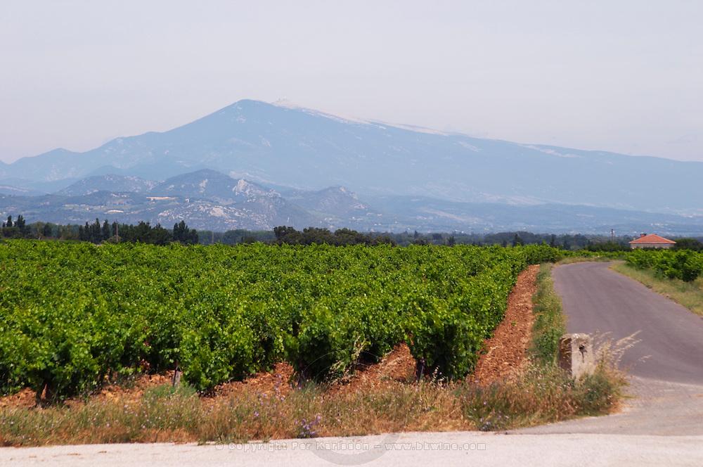 vineyard mont ventoux le cellier des princes chateauneuf du pape rhone france