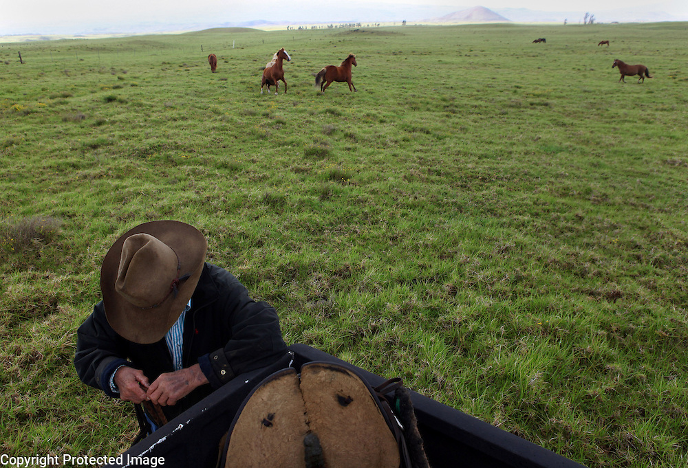 """Retired cowboy and ranch manager, Jamie Dowsett, 85, who spent most of his life on horses and has rich stories to tell, prepares a rope before riding one of his horses near his home in Waimea, Hi.  """"I'm 85 years old and I still think that cows and horses are the best things that ever walked on earth.  I would give anything if I could still be a cowboy...being out there on the land where nobody bothers you, out in the open where it's quiet...the horses are giving you a wonderful ride in the beautiful countryside...that is a feeling not many people have the opportunity to experience,"""" says Dowsett wistfully."""
