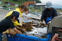 Family washing seaweed on beach near Rausu on Hokkaido Island in Japan