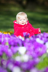 © Licensed to London News Pictures. 23/02/2016. Leeds UK. 9 month old Scarlet plays amongst the Tulips in todays sunshine at Temple Newsam park in Leeds. Photo credit: Andrew McCaren/LNP