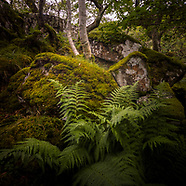 Woodland on Mull