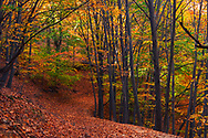 Dirt road across a colorful autumn forest