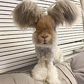 Meet Wally, the bunny with wing-like ears