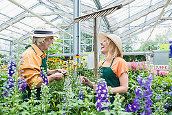 Two gardeners working and smiling in greenhouse, Augsburg, Bavaria, Germany