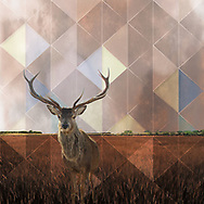 Reindeer facing forward in tall brown grass with a grunge sky divided up by a tinted triangle-diamond geometrical pattern.