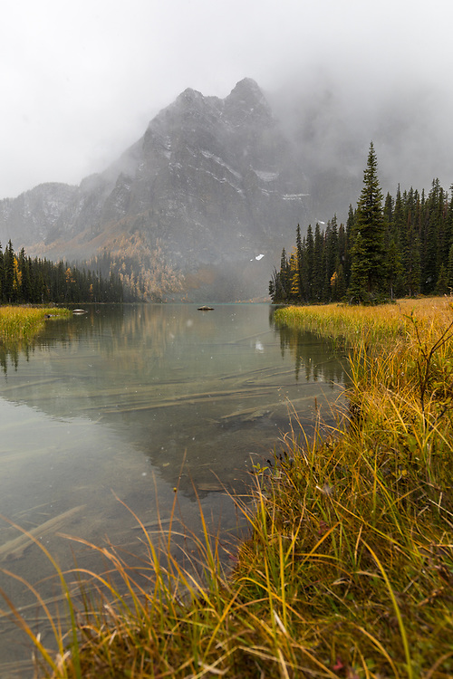Trail running to Gibson Pass while the larches were changing colour in the snow in Banff National Park