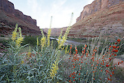 SHOT 5/7/16 7:52:17 AM - Moab is a city in Grand County, in eastern Utah, in the western United States. Moab attracts a large number of tourists every year, mostly visitors to the nearby Arches and Canyonlands National Parks. The town is a popular base for mountain bikers and motorized offload enthusiasts who ride the extensive network of trails in the area. Includes images of Scenic Byway 128, Fisher Towers and downtown Moab. (Photo by Marc Piscotty / © 2016)