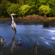 A different background was applied to this picture of the heron.
