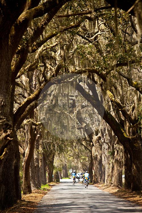 Bicyclists ride down a live oak avenue Savannah, Georgia, USA.
