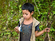 A young Akha Pouli boy from Ban Picherkao with a bird he has caught with a trap, Phongsaly province, Lao PDR. For families living away from the main roads and markets, food caught or collected from the wild, especially edible plants and small animals still make up fifty per cent of their diet.  Nature's bounty in providing for the Lao may be plentiful, but this does not mean that the task of growing and finding enough food for family subsistence and maintenance is easy. It is a major preoccupation of rural families and takes the bulk of time and energy of every man, woman and child.