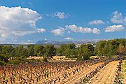 View over the vineyard in spring towards the Ste Baume mountains. Grenache Domaine de la Tour du Bon Le Castellet Bandol Var Cote d'Azur France