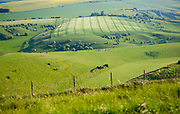 Summer view of grass grazing fields and chalk landscape from Cherhill Down. Wiltshire, England, UK