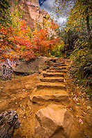 Rock staircase along the Emerald Pools trail in Zion National Park.