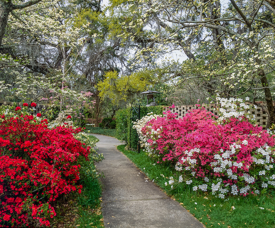 Garden path with azaleas & dogwoods, Brookgreen Gardens, Murrells Inlet, SC