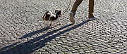 Man dog walking with small Jack Russell terrier making shadows across paving cobble stones in Bruges, Belgium