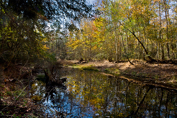 Stock photo of reflections of colorful foliage reflecting in a quiet stream