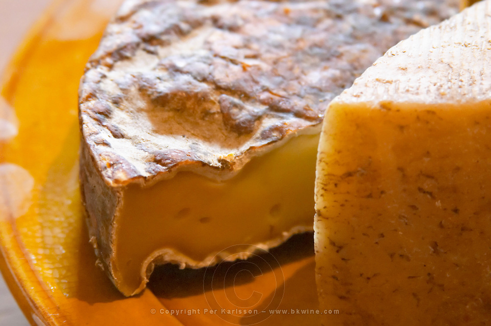 Old aged St Nectaire cheese. Domaine Piccinini in La Liviniere Minervois. Languedoc. France. Europe.