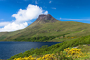 Stac Pollaidh, Stack Polly, mountain, loch and gorse within Inverpolly National Nature Reserve in Coigach area of the North West Highlands Geopark, Scotland